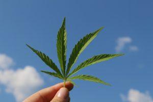 ミシガン州は静かにCBDの禁止を廃止し、麻の料金を設定
